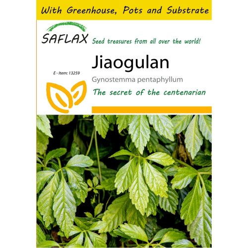 Saflax Potting Set - Jiaogulan - Gynostemma Pentaphyllum - 30 Seeds - with Mini Greenhouse, Potting Substrate and 2 Pots
