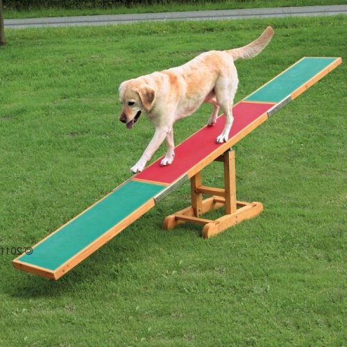 Dog Agility Seesaw Training Outdoor Competitions Fun Sport