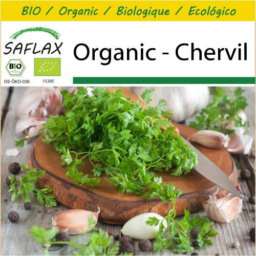 SAFLAX Potting Set - Organic - Chervil - 800 certified organic seeds  - Anthriscus