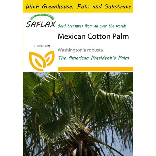 Saflax Potting Set - Mexican Cotton Palm - Washingtonia Robusta - 12 Seeds - with Mini Greenhouse, Potting Substrate and 2 Pots