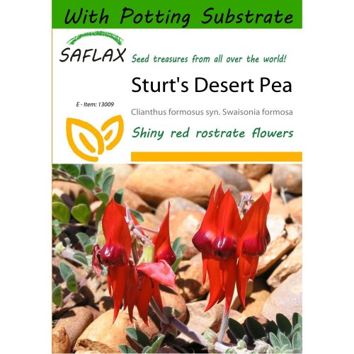 Saflax  - Sturt's Desert Pea - Clianthus Formosus Syn. Swaisonia Formosa - 20 Seeds - with Potting Substrate for Better Cultivation