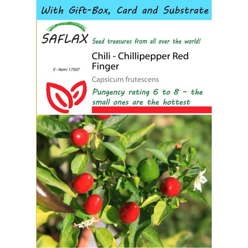 Saflax Gift Set - Chili - Chillipepper Red Finger - Capsicum Frutescens - 25 Seeds - with Gift Box, Card, Label and Potting Substrate