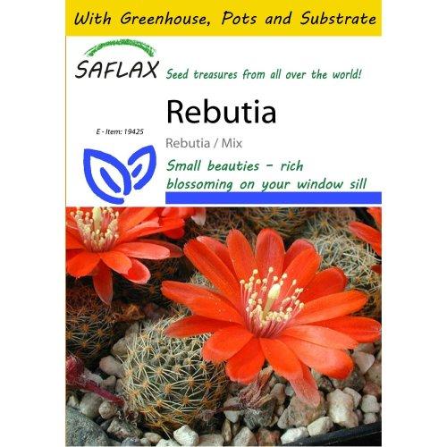 Saflax Potting Set - Rebutia - Rebutia / Mix - 40 Seeds - with Mini Greenhouse, Potting Substrate and 2 Pots