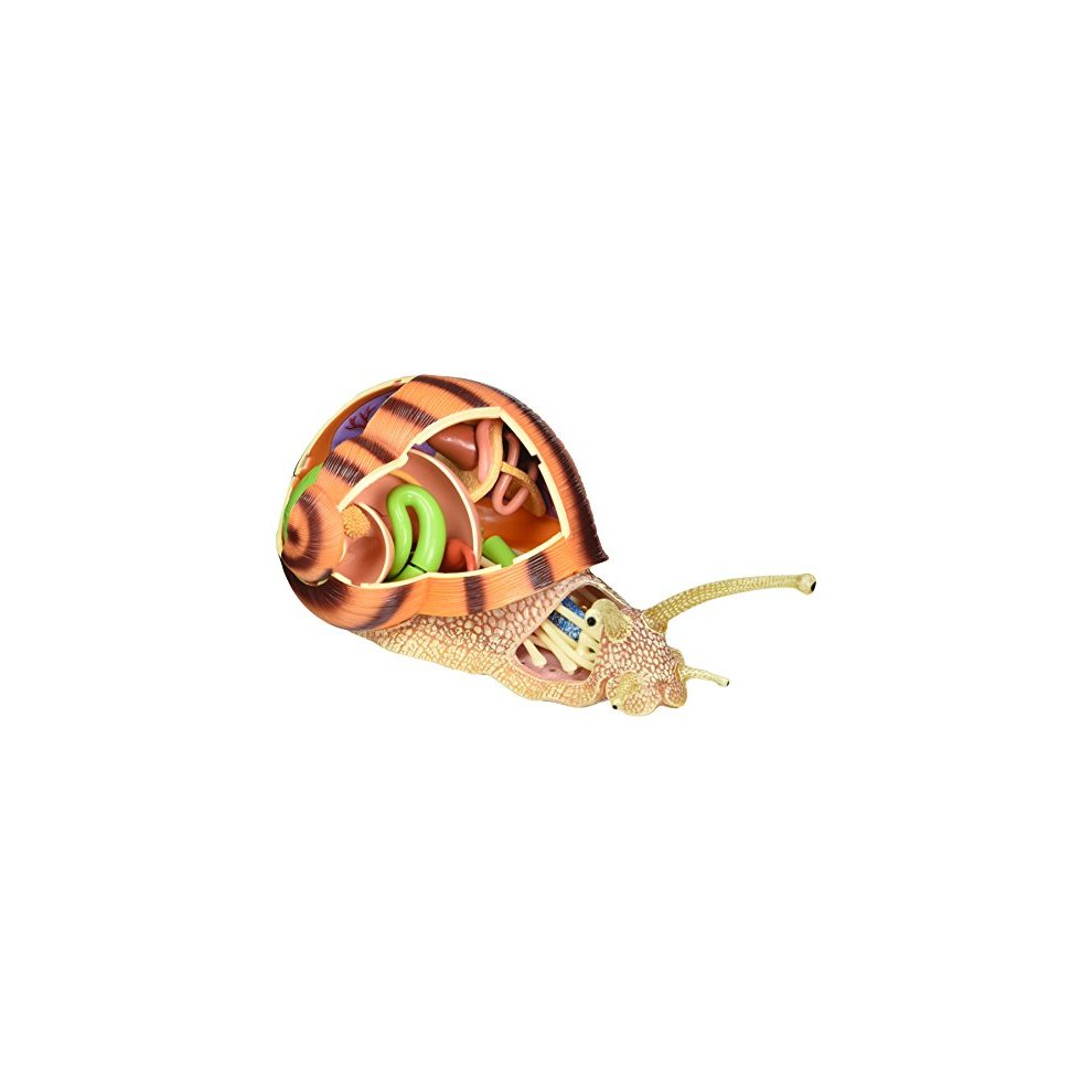 Tedco 4D Vision Snail Anatomy Model on OnBuy