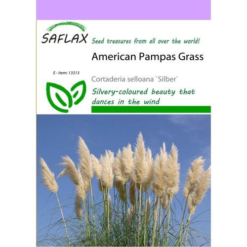 Saflax  - American Pampas Grass - Cortaderia Selloana `silber` - 200 Seeds