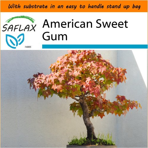SAFLAX Garden in the Bag - Bonsai - American Sweet Gum - Liquidamber - 100 seeds