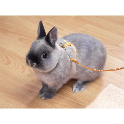 Options Small Animal Harness & Lead Set Paw Print Asstd Small (Pack of 2)