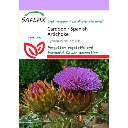 Saflax  - Cardoon / Spanish Artichoke - Cynara Cardunculus - 50 Seeds
