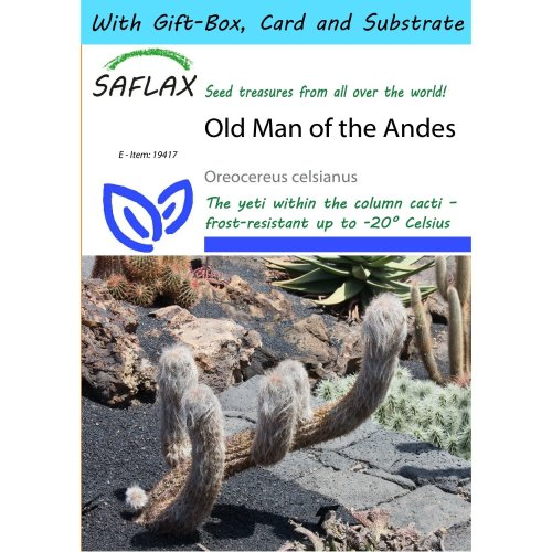 Saflax Gift Set - Old Man of the Andes - Oreocereus Celsianus - 40 Seeds - with Gift Box, Card, Label and Potting Substrate