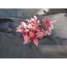 Yuzet® Weed Control Fabric | 3m Wide Ground Cover